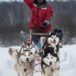 Ein Hundschlitten wird von Huskys gezogen