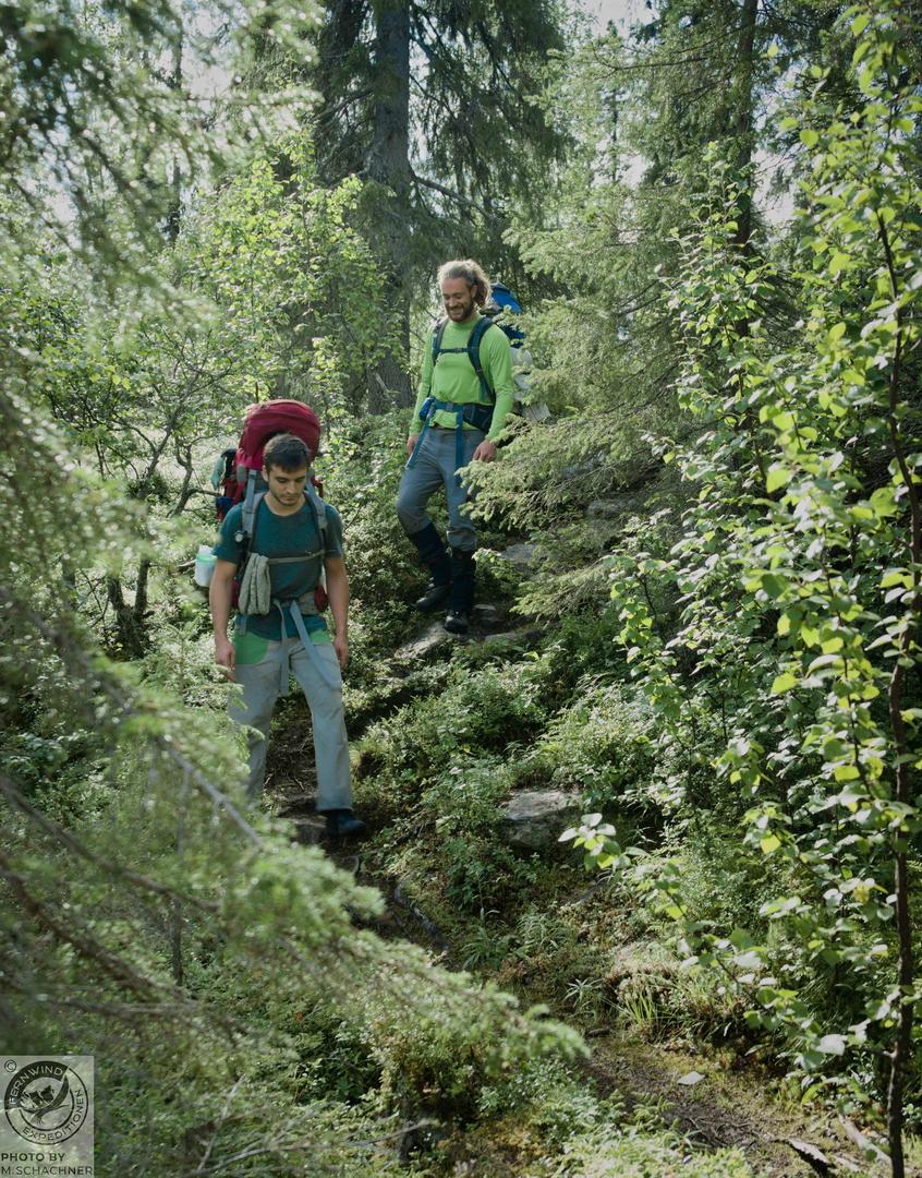 fernwind schweden sarek scouting trekking expedition Waldweg