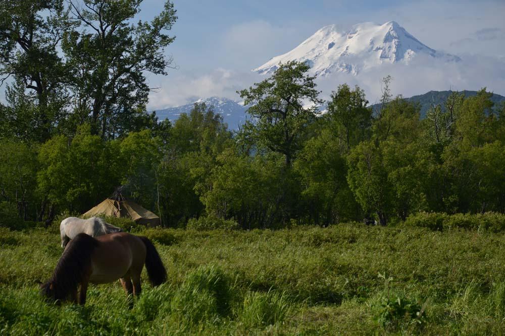 Zwei Pferde grasen. Im Hintergrund ist ein schneebedeckter Berg.