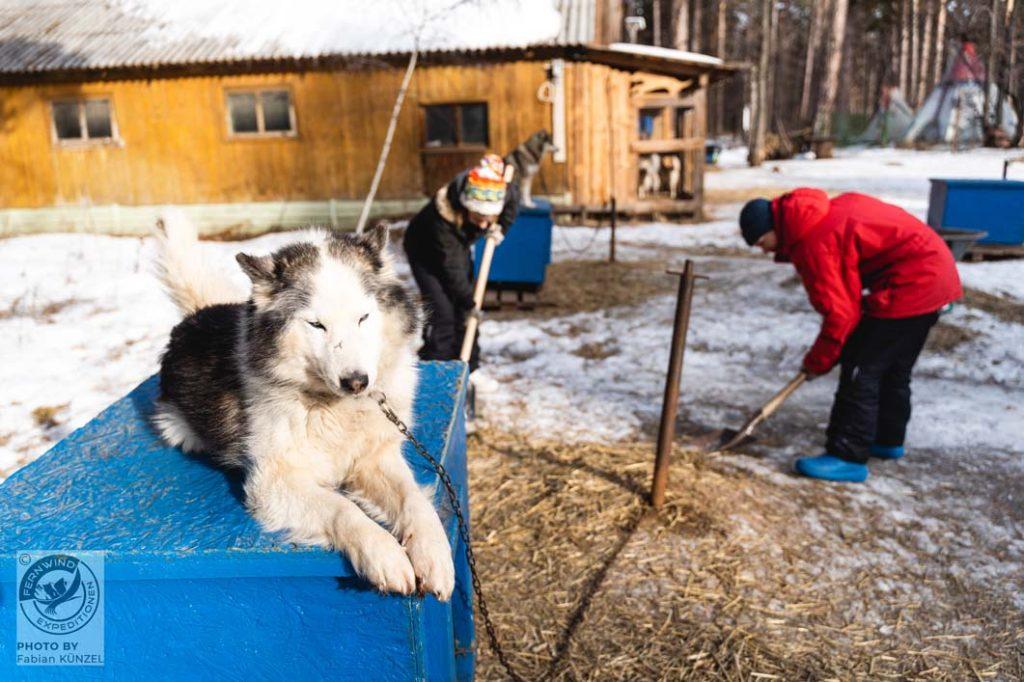 Ein Hund sonnt sich auf seiner Hütte