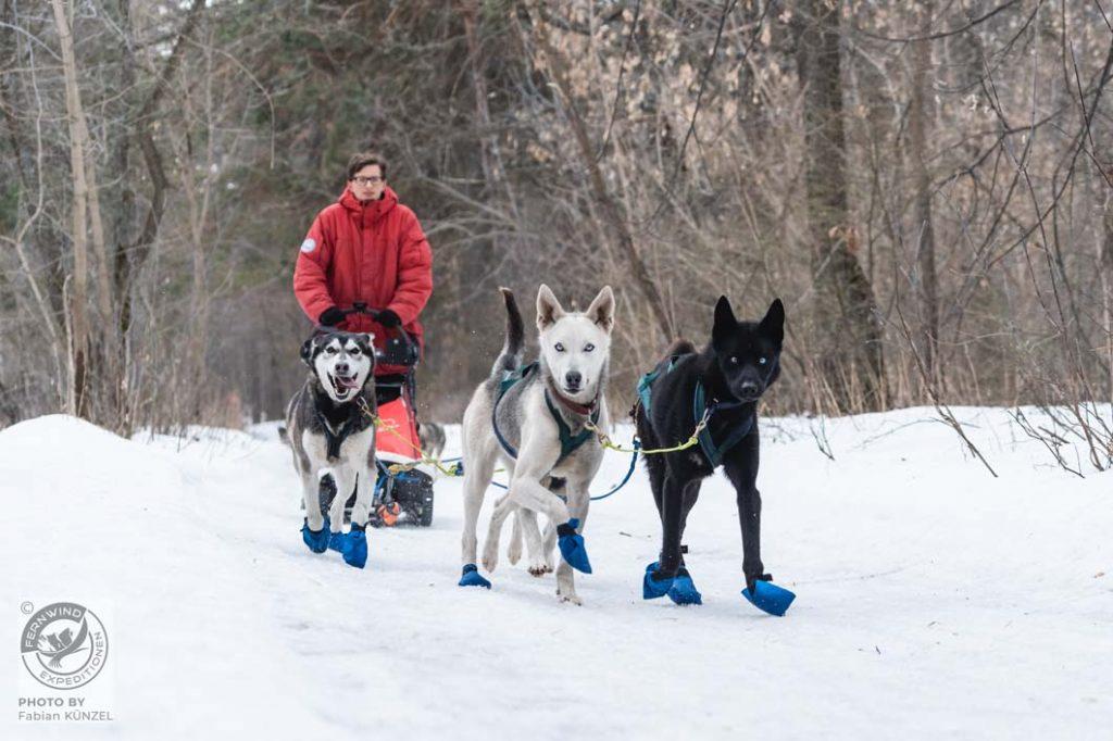 Erste Ausfahrt mit dem Hundeschlitten